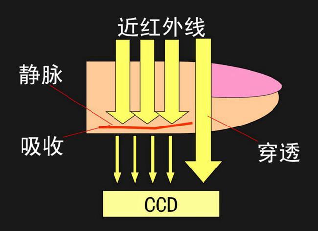 静脉识别中滤光片的工作方式